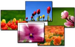 Worship Photos Sensational Spring Mini-Collection (Download Version)